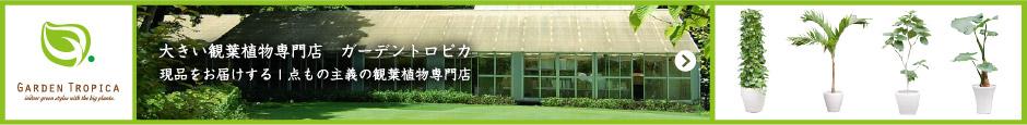 大きな観葉植物専門店ガーデントロピカ